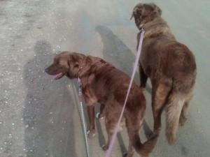 Walking with Lula