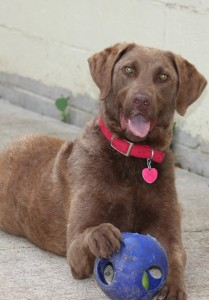 Sara and her ball