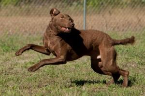 Rocky Jumping