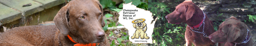 Chesapeake Retriever (Chessie) Rescue of Wisconsin (WI)