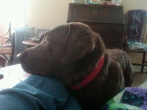 Stella resting head