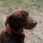 Hershey Profile