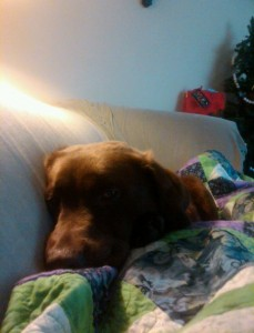 Hershey Snuggling on the couch