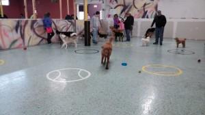 Yukon at doggie daycare