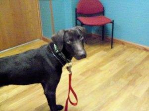 Roux waiting for vet