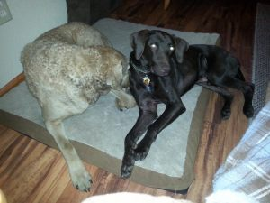 Roux with foster sibling